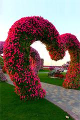 Парк цветов - Dubai Miracle Garden
